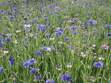 春の花25