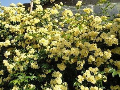 春の花26