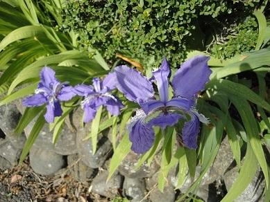 春の花27