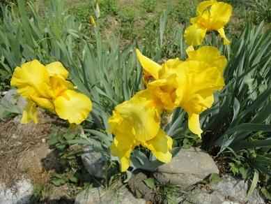 春の花28