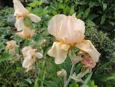 春の花29