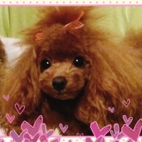s_020116-dog-photo.jpg