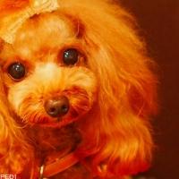 s_041089-dog-photo.jpg