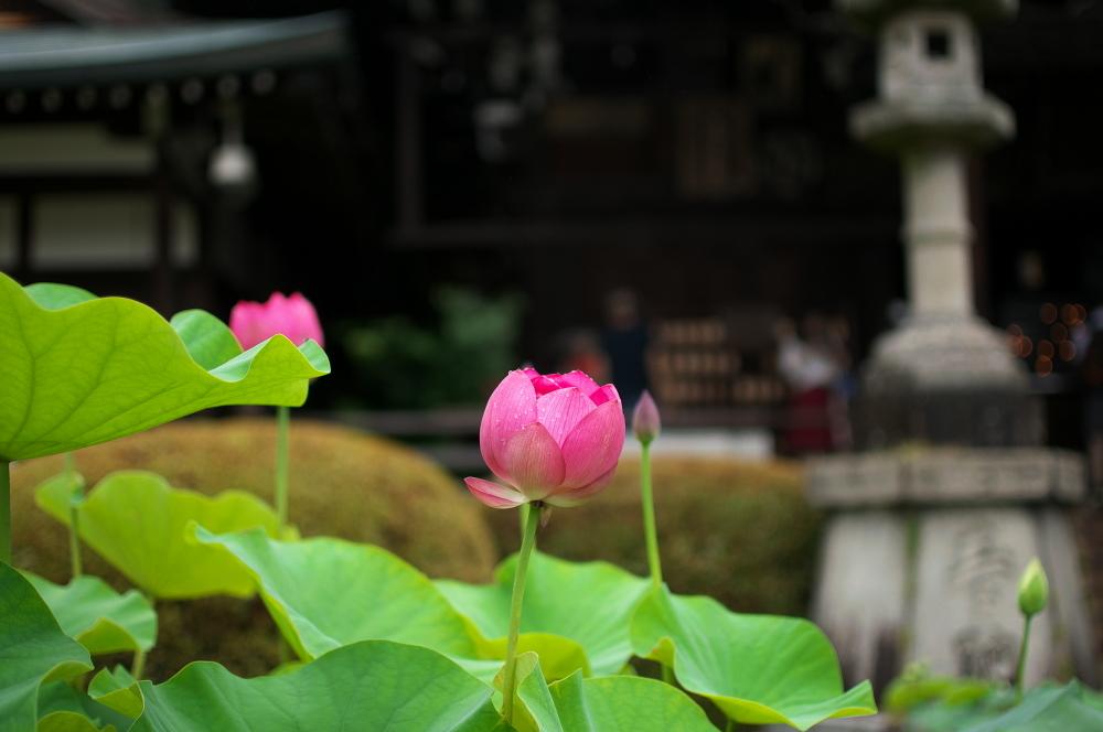 水絡み (4)