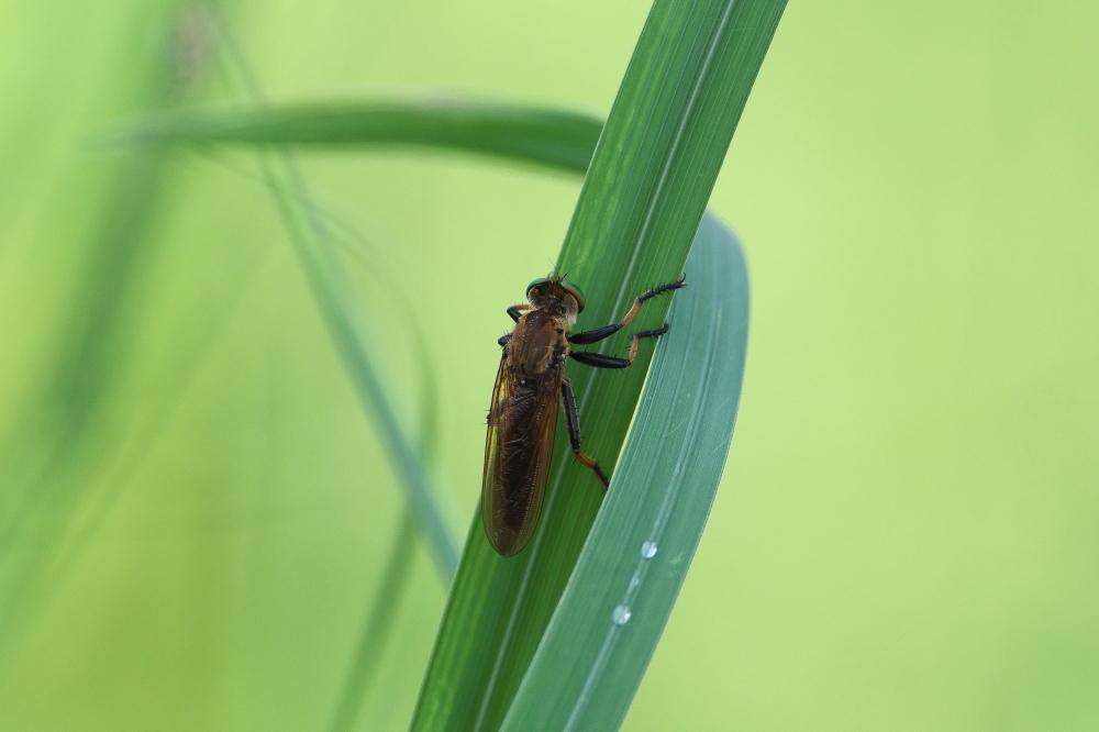 虫 (5)