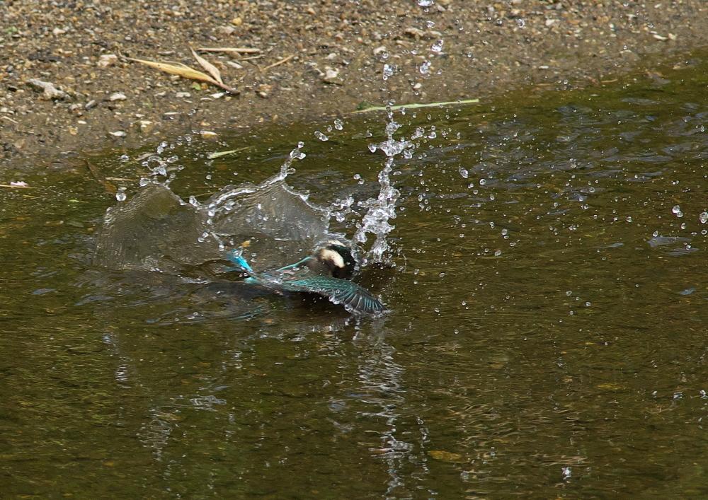 魚落とす (1)