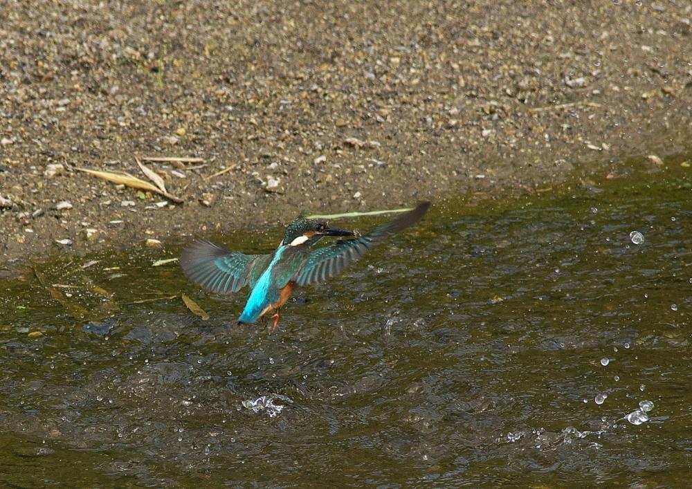 魚落とす (3)