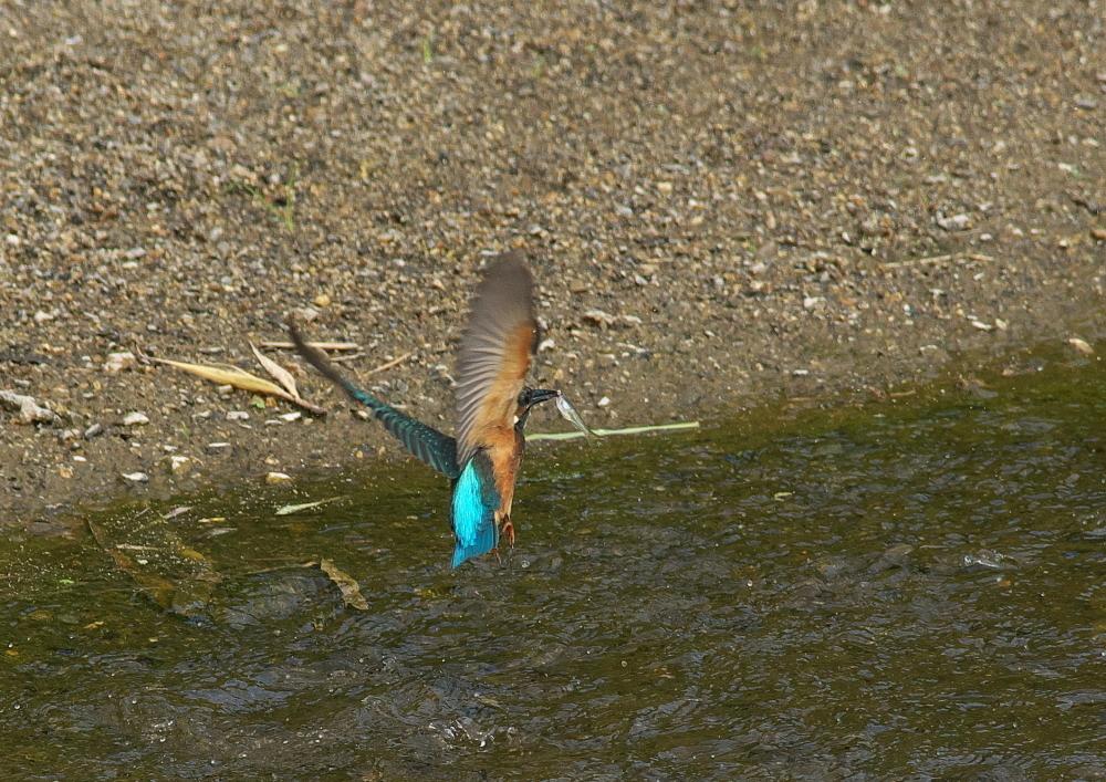 魚落とす (4)