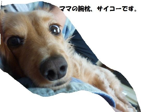 P1070348.jpg