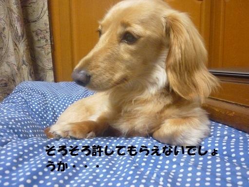 P1080694.jpg