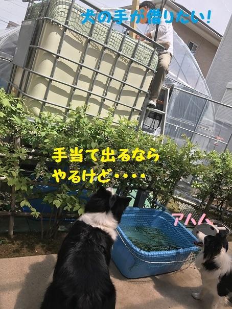 IMG_2068_201705121926428b4.jpg