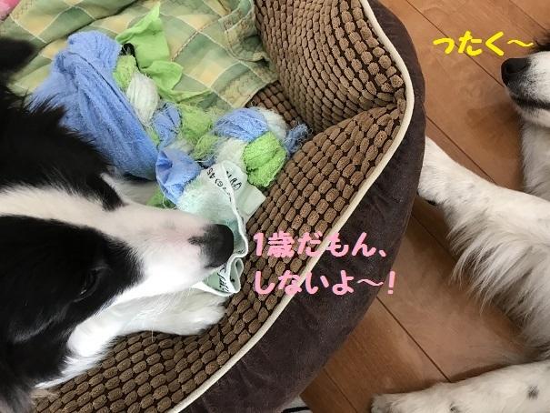 IMG_2452_20170614200640e48.jpg