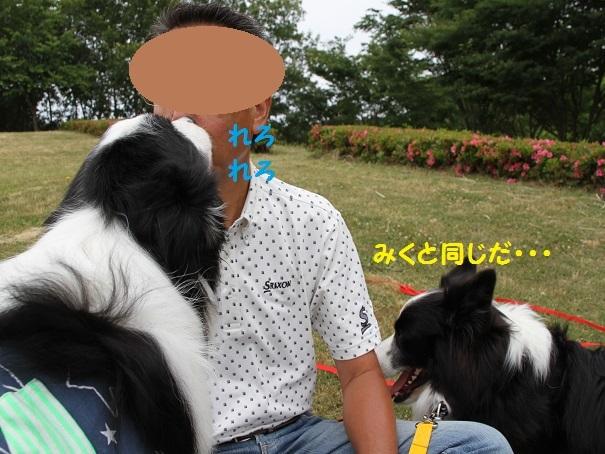 IMG_4529_201706102008413d1.jpg