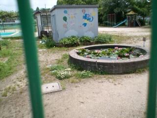 幼稚園ハス