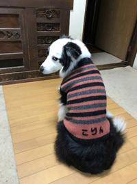 こりんちゃんセーター