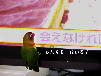 テレビ好き4