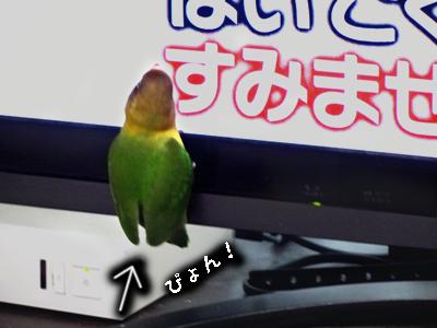 テレビ好き2
