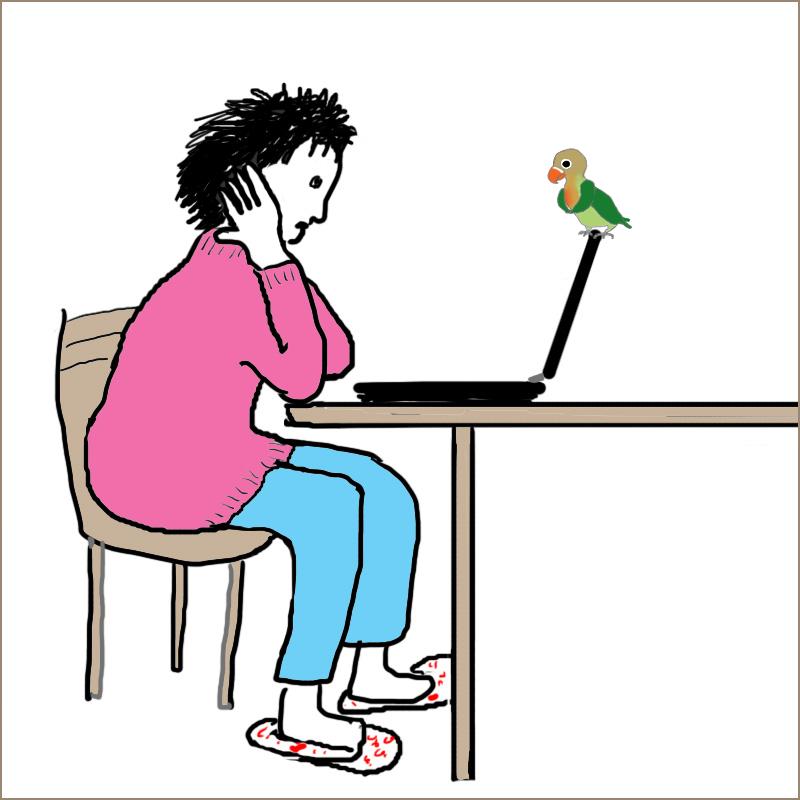 パソコンにとまるモモ