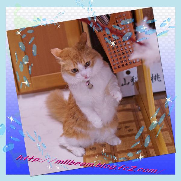 huruiHuroku014.jpg
