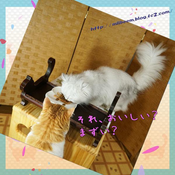 koinoboriDeco010.jpg
