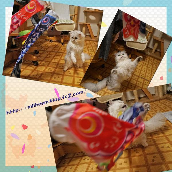 koinoboriDeco013.jpg