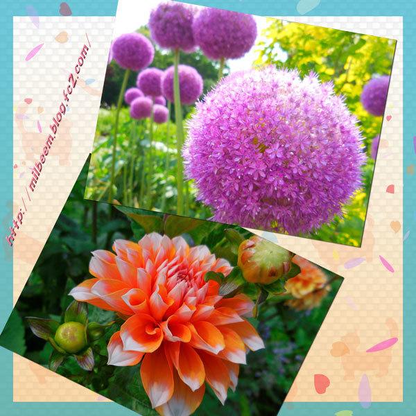 milSyudouSannpo013.jpg