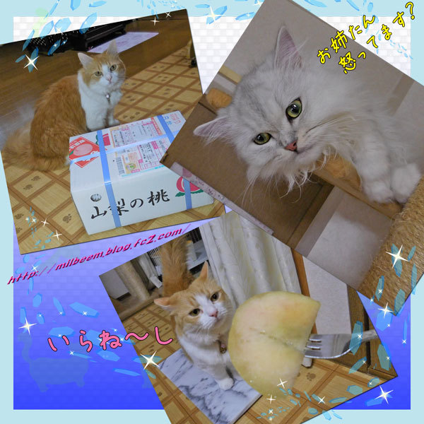 yottunoHako006.jpg