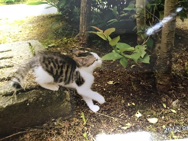 8-3前田すみ子さま吉村さま保護猫5