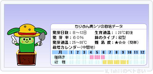 ペトさい(青シソ)20