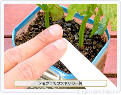 ペトさい(青シソ)138