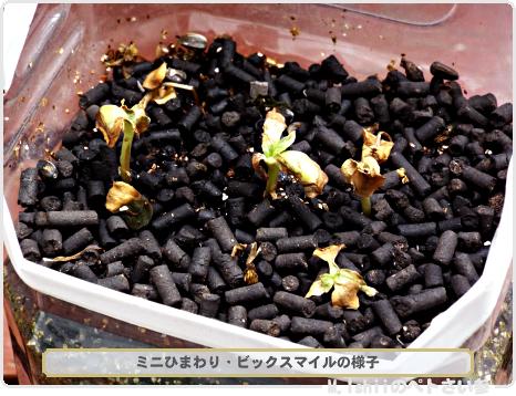 種の蒔き直し02