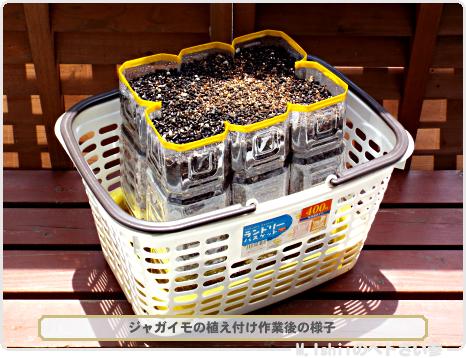 ジャガイモの本栽培ZERO04
