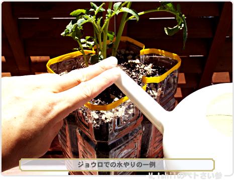 ジャガイモの試験栽培14
