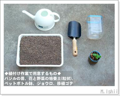 ハーブのペット栽培(バジル・改)12