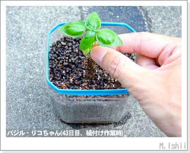 ハーブのペット栽培(バジル・改)13
