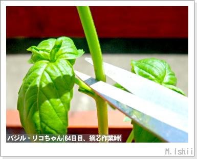 ハーブのペット栽培(バジル・改)20