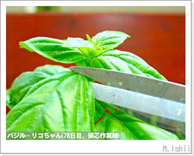 ハーブのペット栽培(バジル・改)28