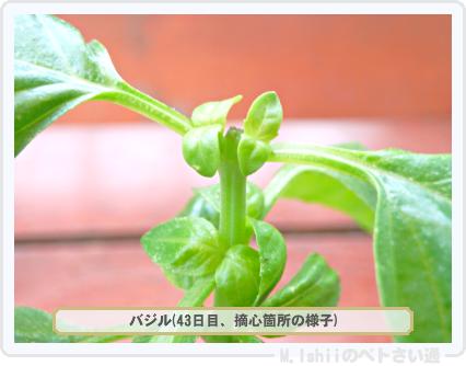 ペトさい(バジル・改)29