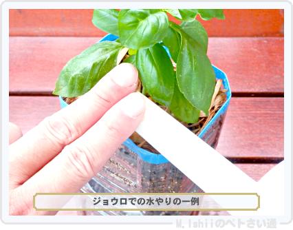 ペトさい(バジル・改)38