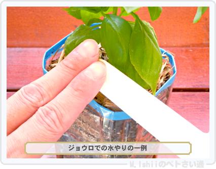 ペトさい(バジル・改)41