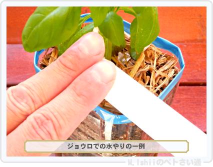 ペトさい(バジル・改)45