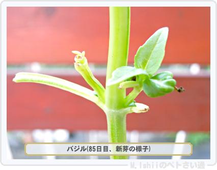 ペトさい(バジル・改)51