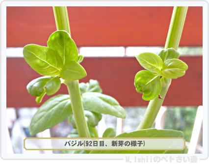 ペトさい(バジル・改)55