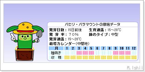 ハーブのペット栽培(パセリ・改)02