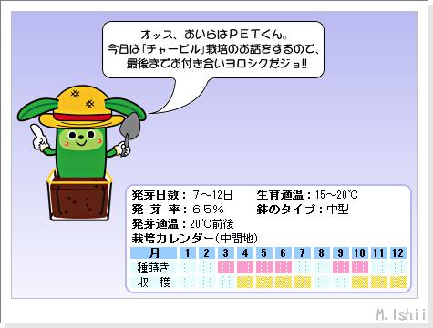 ハーブのペット栽培(チャービル・改)01