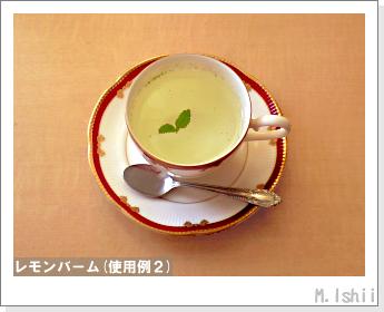 ペット栽培II(レモンバーム)42
