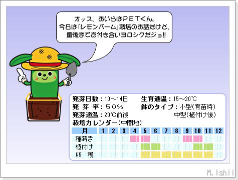 ハーブのペット栽培(レモンバーム)01