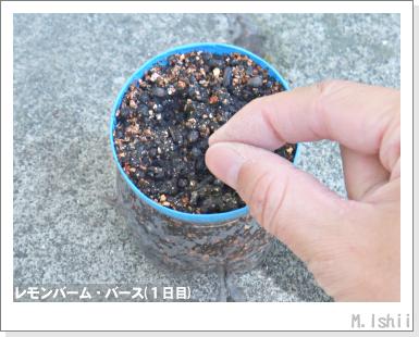 ハーブのペット栽培(レモンバーム)05