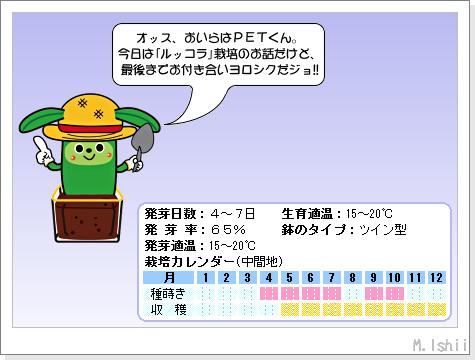 ハーブのペット栽培(ルッコラ)01
