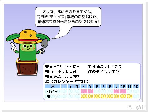 ハーブのペット栽培(チャイブ)01